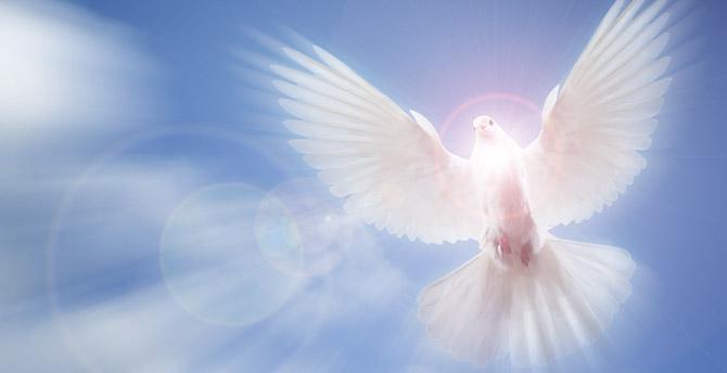 false prophets dove