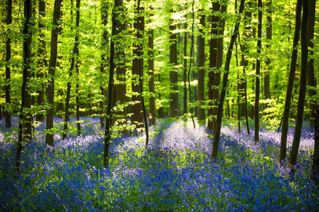 nature canvas prints image