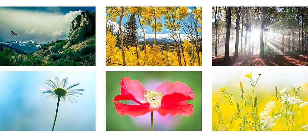 nature canvas prints photos images