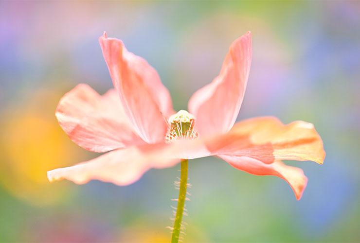 god images flower pink