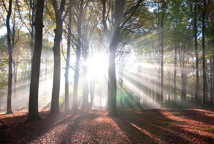 god images forest