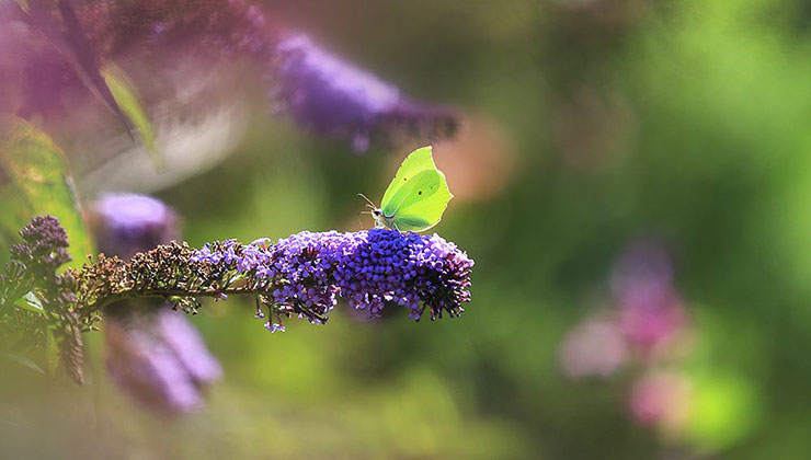 god photos green butterfly