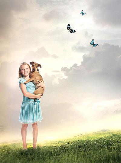 dogs pets heaven