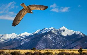 Nature canvas print of a bird flying to a mountain